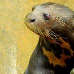 Encuentros Silvestres: Formas de practicar un turismo responsable