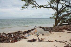 Read more about the article Plástico: El enemigo número 1 de la fauna marina.
