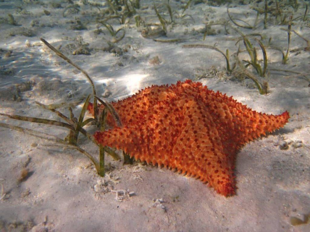 Estrella de mar en el fondo marino