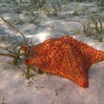 ¿Qué pasa si sacas una estrella de mar del agua?